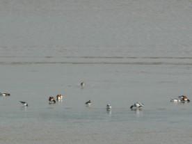 dans la baie de la Fresnaye (9)