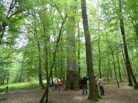 forêt de tronçais (14)