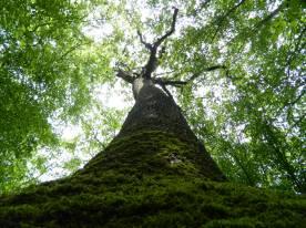 forêt de tronçais (15)