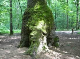 forêt de tronçais (16)