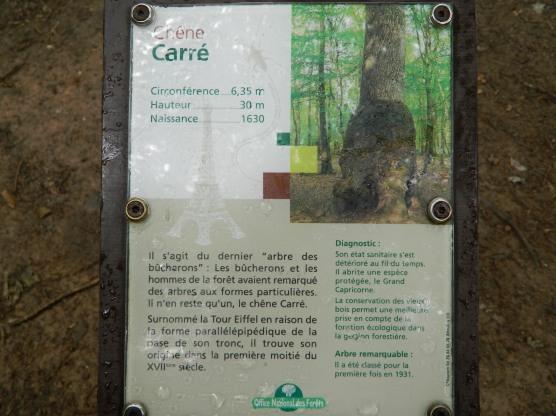 forêt de tronçais (17)