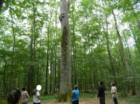 forêt de tronçais (20)