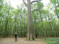forêt de tronçais (22)