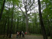forêt de tronçais (24)