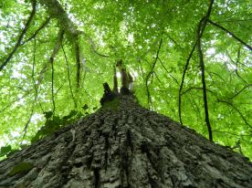 forêt de tronçais (3)