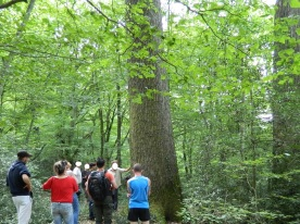 forêt de tronçais (4)