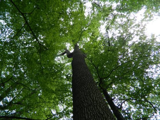 forêt de tronçais (6)