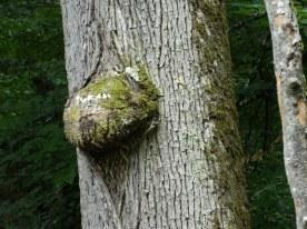 forêt de tronçais (7)