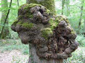forêt de tronçais (9)