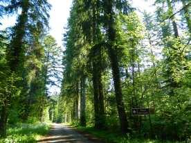 jura forêt de joux (1)