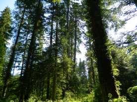 jura forêt de joux (2)
