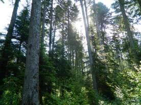 jura forêt de joux (3)