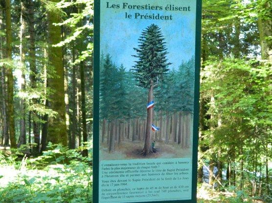 jura forêt de joux (4)