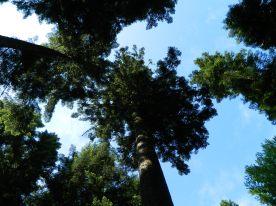 jura forêt de joux (5)