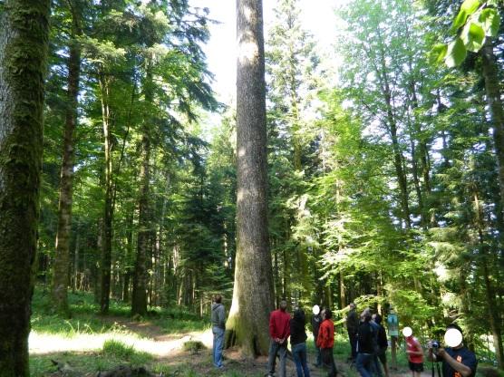 jura forêt de joux (6)