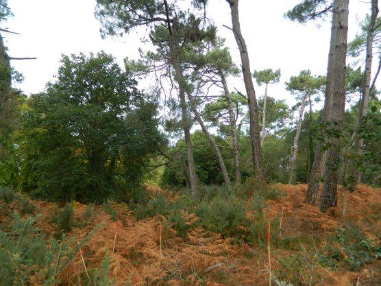 Natura 2000 marquage régénération naturelle (1)