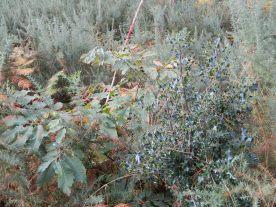 Natura 2000 marquage régénération naturelle (6)