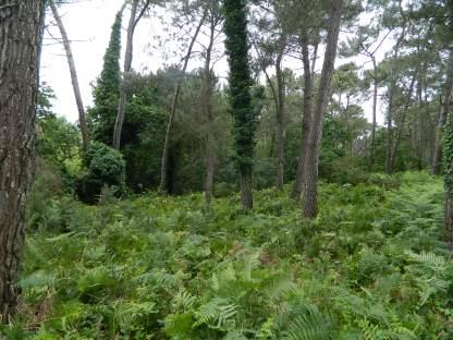 Natura 2000 roulage de la fougères (2)