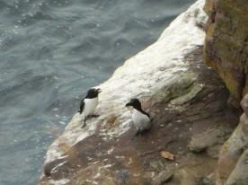 pingouins (2)