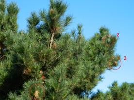 pré nids dégats primaires (4)