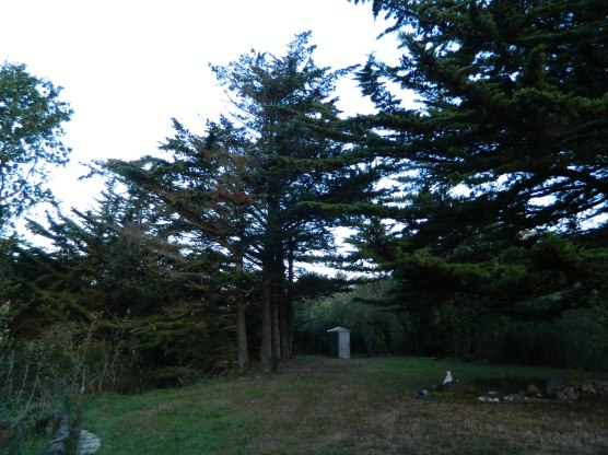 six cyprès en ligne sur un petit terrain (1)