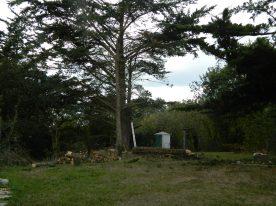 six cyprès en ligne sur un petit terrain (2)