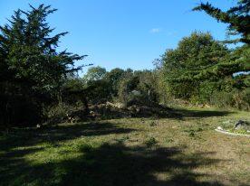 six cyprès en ligne sur un petit terrain (3)
