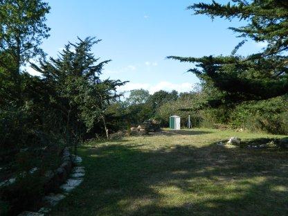 six cyprès en ligne sur un petit terrain (5)