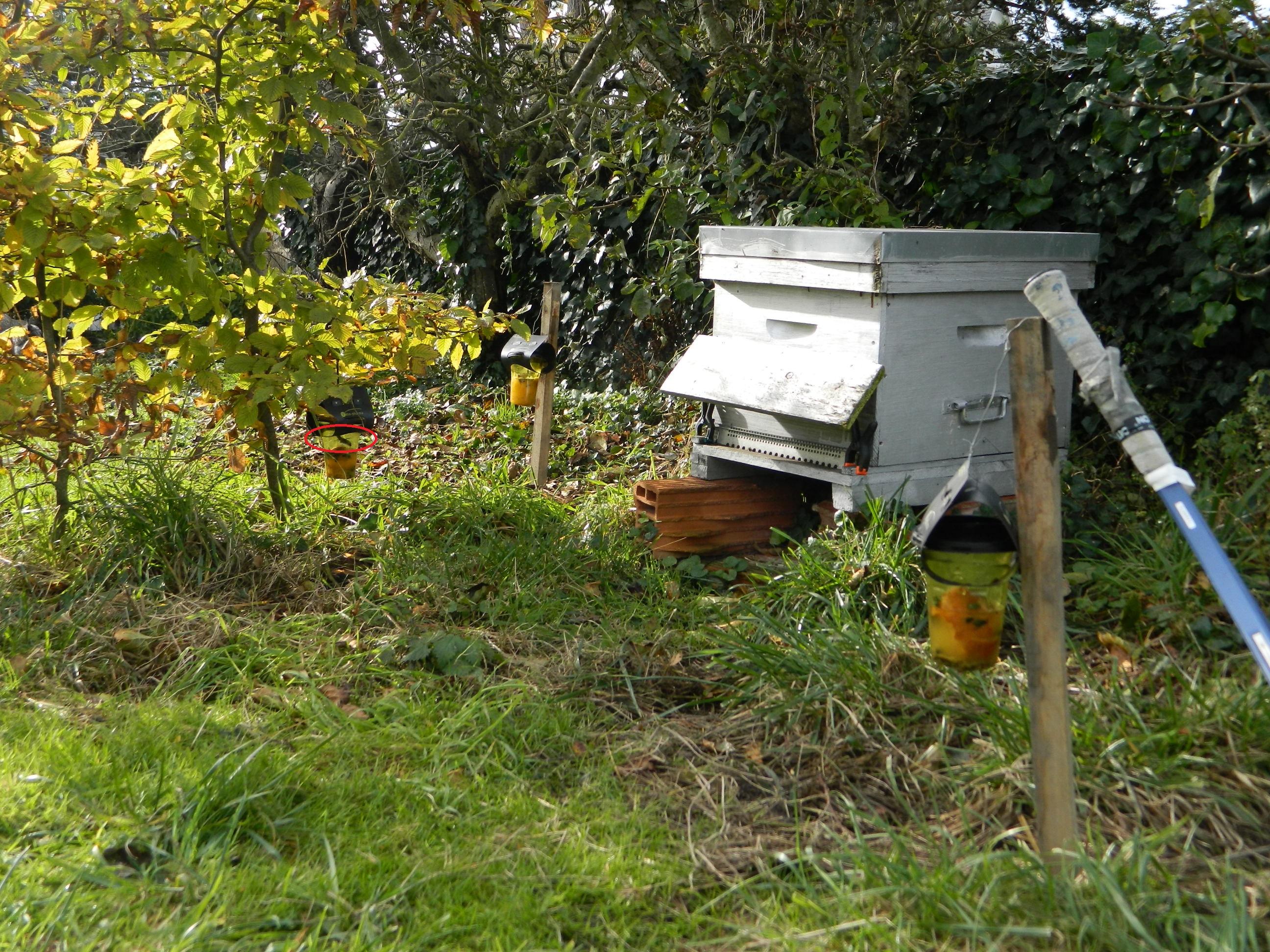 14 novembre 13h30 la température n'est pas suffisante pour les abeilles