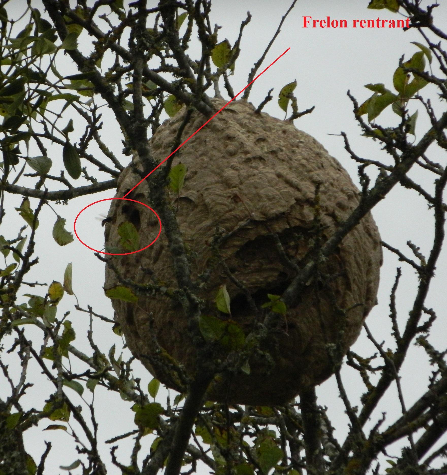 nid à 1 km de la ruche le 2 novembre 2019.